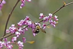 весна пиршества Стоковое Изображение RF