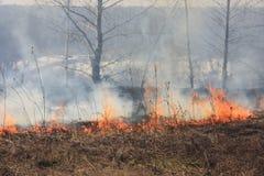 весна пожара Стоковое Изображение RF