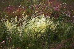 весна поля одичалая стоковое изображение