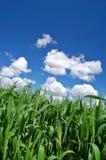 весна поля сельская стоковое изображение