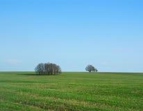 весна поля Стоковые Фотографии RF