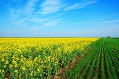 весна поля Стоковая Фотография