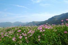весна поля Стоковое Изображение