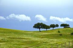 весна поля Стоковая Фотография RF