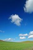 весна поля Стоковые Фото