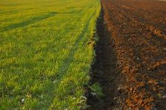 весна поля Стоковое фото RF