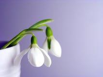 весна посыльных Стоковая Фотография RF