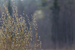 Весна, предпосылка a естественная стоковое фото rf