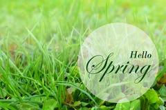 весна предпосылки свежая Поздравительная открытка концепции с надписью скачет здесь Мягкое фото фокуса uncut зеленой li травы и с Стоковое Фото