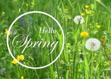 весна предпосылки свежая Поздравительная открытка концепции с надписью скачет здесь Мягкое фото фокуса uncut зеленой li травы и с Стоковая Фотография RF