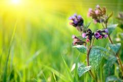 весна предпосылки свежая стоковое изображение