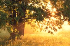 весна предпосылки солнечная Стоковые Изображения