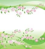 весна предпосылки Стоковые Изображения