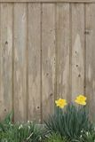 весна предпосылки Стоковая Фотография