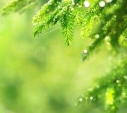 весна предпосылки естественная Стоковая Фотография
