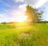 весна предпосылки солнечная цветастая весна ландшафта Стоковая Фотография RF