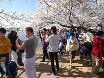 Весна приезжает в DC Вашингтона Стоковые Фото