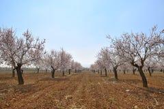 Весна приезжает Стоковые Изображения RF