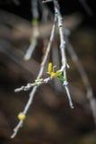 Весна приносит новую жизнь Стоковая Фотография