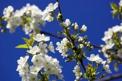 весна принципиальной схемы Стоковое фото RF