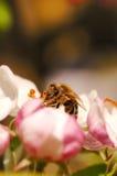 весна принципиальной схемы Стоковая Фотография RF