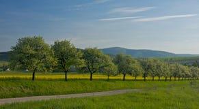 весна природы Стоковое Изображение RF