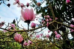 Весна приходит в Новую Зеландию Стоковое Фото