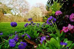 Весна приходит в Новую Зеландию Стоковые Изображения