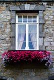 Весна приходит на мой windowsill Стоковая Фотография RF