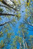 Весна пришла к северу Стоковая Фотография