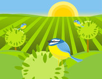 весна птиц Стоковое Изображение RF