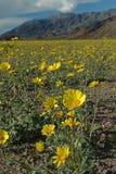 весна пустыни Стоковое Изображение