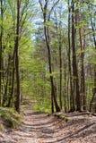 весна путя пущи Стоковое фото RF