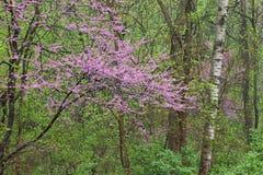 весна пущи Стоковое фото RF