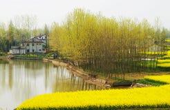 весна пущи Стоковая Фотография