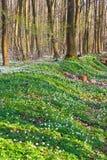 весна пущи Стоковое Фото