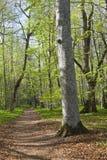 весна пущи footpath Стоковые Изображения