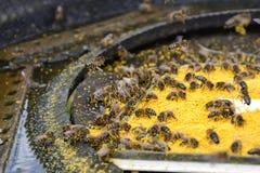 Весна пчелы приманки Еда для пчел Apiculture Стоковое Изображение RF