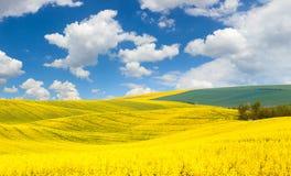 Весна развевает ландшафт холмов красочных полей Стоковое Изображение RF