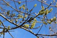 Весна разветвляет 'ки ² ÐΜÑ ½ иÐΜ Ð ½ Ð  ÐΜÐ Ð'ÐΜÑ Стоковое фото RF