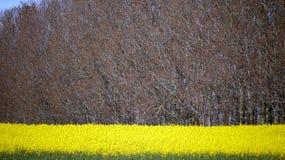 весна рапса поля Стоковое Изображение RF