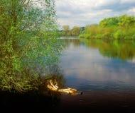 весна реки ландшафта Стоковые Фотографии RF