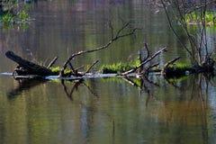 весна реки малая Стоковое Изображение