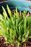 весна роста новая Стоковое Фото
