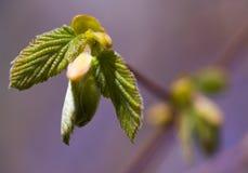 весна роста новая Стоковое фото RF