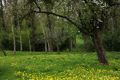 весна сада плодоовощ старая Стоковое Изображение