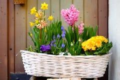 весна сада цветков корзины Стоковое Фото