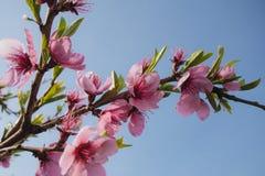 весна сада цветков Стоковая Фотография