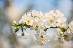 весна сада цветков Стоковые Фотографии RF