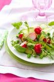 весна салата Стоковое фото RF